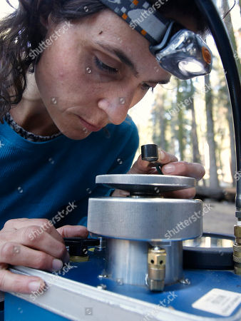 Wendy Baxter, a tree biologist from the University of California Berkeley, uses a pressure chamber to measure the water tension on a tree sample taken from a Giant Sequoia at Sequoia National Park near Visalia, Calif. Researchers study water tension in the trees, an indicator of how they are responding to the drought. Researchers are studying how California's drought is affecting the Giant Sequoias, some more than 3,000 years old and 300 feet tall, making them among the oldest and largest living things on Earth