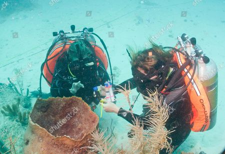 Grace Young, Liz Bentley Magee Mission scientists Grace Young, left an MIT graduate in Mechanical & Ocean Engineering, and Liz Bentley Magee, right, Northeastern University diving safety officer and Three Seas Program coordinator, conduct experiments on sponges outside Aquarius Reef Base, a laboratory 63 feet below the surface in the waters off Key Largo, in the Florida Keys National Marine Sanctuary, . A team of filmmakers and researchers dove with Fabien Cousteau on June 1 to Aquarius. At the mission's mid-point, the FIU researchers traded places with researchers from Northeastern, who will return to land July 2 with Cousteau. They've been studying the effects of climate change and pollutants such as fertilizers on the reef