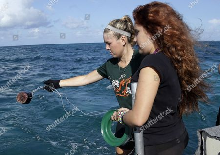 Emily Rose Nelson, Minerva Olazabal University of Miami student Emily Rose Nelson, left, and Upward Bound student Minerva Olazabal, 16, right, throw bait for catching sharks into the water during a shark tagging expedition off Islamorada in the Florida Keys through the RJ Dunlap marine conservation program at the University of Miami. A group of first generation college-bound students joined researchers with the R.J. Dunlap Marine Conservation Program on Aug. 13, 2013, off the Florida Keys in the hopes of catching sharks to be tagged for scientific research