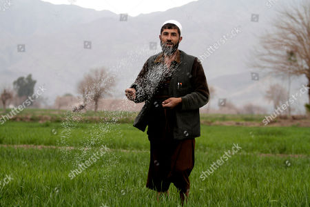 Mohammad Yousuf 34, An Afghan farmer, throws fertilizer on his land in the Surkhrod district of Jalalabad, the provincial capital of Nangarhar, east of Kabul, Afghanistan, . Despite being a mineral-rich country, four decades of war have left Afghanistan as one of the least developed countries in the world and highly dependent on foreign aid