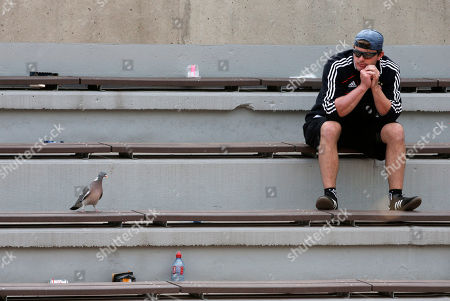 A spectator watches a pigeon perching on the stands as Italy's Francesca Schiavone plays Hungary's Melinda Czink during their first round match of the French Open tennis tournament at the Roland Garros stadium in Paris