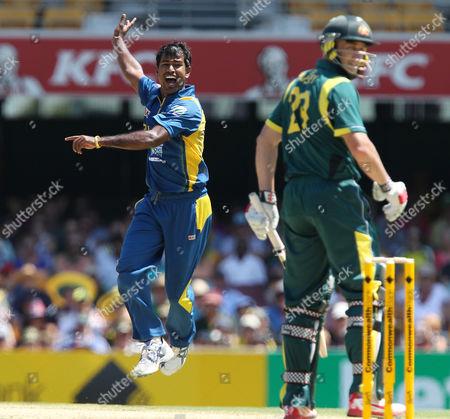 Stock Photo of Nuwan Kulasekara Sri Lanka's Nuwan Kulasekara celebrates after getting the wicket of Australia's David Hussey during their One Day International cricket match in Brisbane, Australia