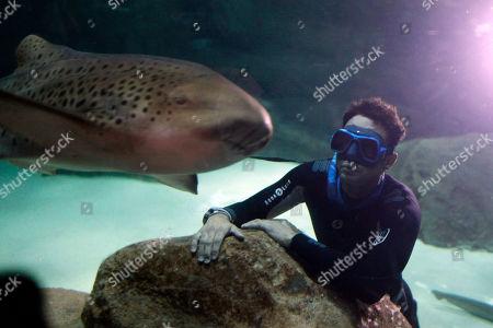 The four times Apnea world record holder, Pierre Frolla, dives near a zebra shark at the Aquarium of Paris