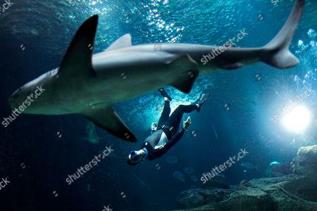 The four times Apnea world record holder, Pierre Frolla, dives near a shark, at the Aquarium of Paris