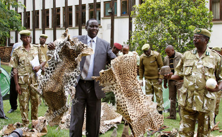 Kenya Wildlife Service director William Kibet Kiprono displays siezed leopard and cheetah skins in Nairobi, Kenya