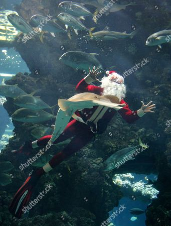 Four times World?s Record holder in free immersion, Pierre Frolla of Monaco, dressed up as Santa Claus, dives without an aqualung amongst fish in the Oceanographic Museum of Monaco aquarium