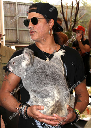 Slash American rock band Guns N' Roses' lead guitarist Slash poses with a koala named Tinkerbell at the launch of the Bob Irwin Wildlife and Conservation Foundation Inc. in Brisbane, Australia, . The foundation was formed to provide ongoing support to Bob Irwin in his life long commitment to preserving the planet's wildlife