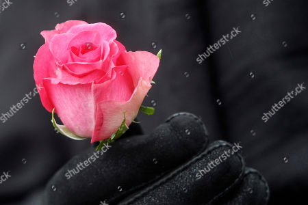 A rose, symbol of the French Socialist Party, is held by a guest during the funeral of former French First Lady Danielle Mitterrand at the Cluny's cemetery, central France, . Mitterrand, a decorated member of the French Resistance and combative advocate for the poor who broke the mold as first lady alongside France's first Socialist president Francois Mitterrand, died Tuesday at age 87