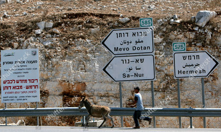 A Palestinian youth leads a donkey next to signs leading to Jewish settlements in the northern West Bank, . Senior Palestinian official Yasser Abed Rabbo said Monday that President Mahmoud Abbas remains ready to walk out on Mideast peace talks if Israel resumes construction in its West Bank settlements now that building restrictions have expired