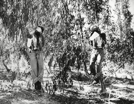 Clifford Martin, Mervyn Paice The bodies of British sergeants Clifford Martin (left) and Marvyn Paice as they hung from eucalyptus trees on July 30 near Netanya, Palestine, Israel in an exclusive picture taken by AP staff photographer James Pringle just prior to explosion of a booby trap that mutilated the bodies. The two sergeants had been kidnapped on July 12