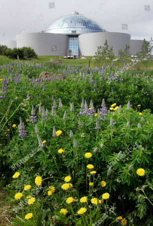 """Wild lupins and dandelions bloom in front of the Perlan, on Öskjuhlíd Hill, in Reykjavik, Iceland. In recent years the country has welcomed eccentric chess master Bobby Fischer, WikiLeaks secret-spiller Julian Assange and the online freedom advocates of the Pirate Party. Could its next guest be NSA leaker Edward Snowden? In an interview outing himself as the source behind stories about the U.S. spy agency's online surveillance programs, Snowden floated the idea of heading to Reykjavik. He told The Guardian newspaper that he was inclined to seek asylum in a country that shared his values _ and """"the nation that most encompasses this is Iceland"""