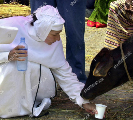 """HUSSEY British actress Olivia Hussey offers water to a cow during a break at the shooting of a film """"Mother Teresa of Calcutta"""" in Colombo, Sri Lanka, . Italian Fabrizio Costa directs the film based on the life story of Nobel Peace prize winner Mother Teresa"""