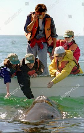 RICHARDSON 13--From left foreground, Kick Kennedy, Sean Brosnan and actor Glenn Close reach out to touch a baby gray whale at Laguna Ignacio, Mexico, as actor Pierce Brosnan and Mary Richardson look on . The two Hollwood stars took part in a meeting held along the shores of the lagoon to discuss saving the whale habitat from a proposed salt plant