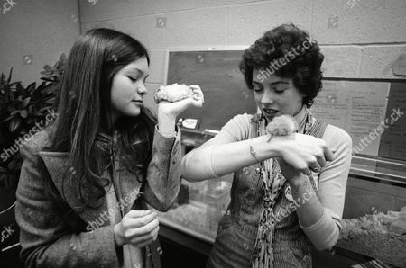 """Valerie Bertinelli, left, and Mackenzie Phillips prefer their Los Angeles TV studio class to regular school not only because of the hamsters they're shown fondling on . The two 17-year-olds attend this class while they're at work acting in the series, """"One Day at Time,"""" in which they play teen-aged sisters. They share private tuition and supervision by a teacher-social worker at the studio, as provided for by the state law regulating working conditions for young performers"""