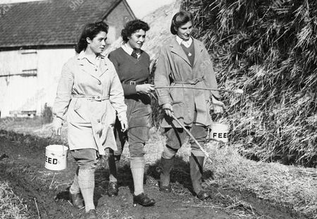 Land Army girls have done a variety of farm jobs in replacing agricultural workers who have joined the armed forces. With shipping space reserved for war material Britain has had to depend on her home farms for food to a vastly greater extent than before the war. The Land girls have been an invaluable aid in raising the agricultural output. They also have taken over the job of protecting the crops from pests which destroy the crops. From left to right: Eva Holding, Kathleen Fairbanks and Molly Welby, three Land Girls, sight rat holes round a stack of hay as they set out for a day of pest-destruction