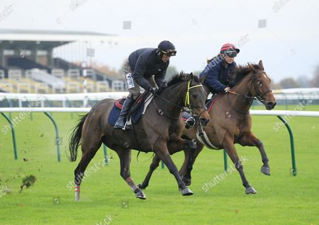 Stock Photo of Coneygree and Nico De Boinville [left] working on the track at Haydock in preparation for the Betfair Chase with Carruthers and Lily Bradstock.