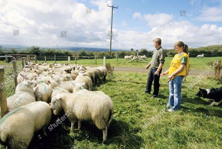 Larry McMullan and his daughter Emma look after their sheep in Loughguile. County Antrim, Ulster, Northern Ireland.