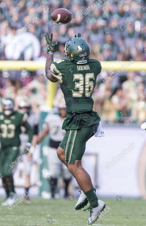 South Florida Bulls defensive back Nate Godwin (36) makes the interception in the 4th quarter in the game between the Central Florida Knights and the South Florida Bulls at Raymond James Stadium in Tampa, Florida