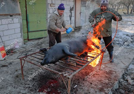 In this picture a man uses a gas burner to clean the skin of a a freshly slaughtered pig of hair in Dambu, Romania. Romanians will vote in parliamentary elections on Dec. 11, a year after a massive anti-corruption drive forced its last prime minister Victor Ponta from power, media moguls were imprisoned and one of the leaders of the second biggest party quit over a graft probe