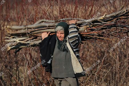 In this picture a woman carries tree branches for fire in Tancabesti, Romania. Romanians will vote in parliamentary elections on Dec. 11, a year after a massive anti-corruption drive forced its last prime minister Victor Ponta from power, media moguls were imprisoned and one of the leaders of the second biggest party quit over a graft probe