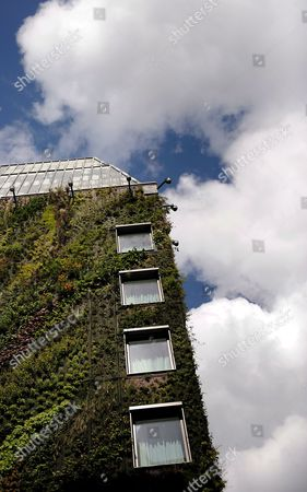 The Vertical Gardens at the Athenaeum Hotel in London Britain 19 May 2009 London's First Vertical Gardens at the Athenaeum Hotel in London Were Created by Patrick Blanc the French Artist and Botanist Blanc Has Been Creating Vertical Gardens All Over the World They Climb Up Shopping Malls in Seoul and Thailand Galleries and Museums in Paris and Madrid and Kanazawa Japan It Appears in Restaurants in Shanghai and Los Angeles and in a Concert Hall in Taipei