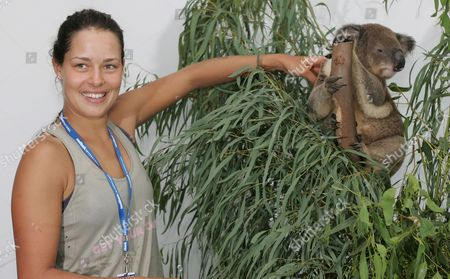 Serbian Tennis Player Ana Ivanovic Meets a 3 5kg Koala Named Kelly On Day Four of the Sydney International 2008 at Sydney's Olympic Tennis Centre Wednesday Jan 9 2008 Ivanovic Earlier Won Her Match Against Katarina Srebotnik of Slovakia in Three Sets 6-3 3-6 6-2 to Advance to the Ladies Quarter Finals