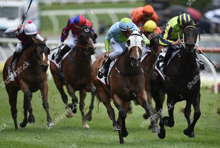 Jockey Steven Arnold Rides Sweet Sherry (3-l) to Victory in the Crockett Stakes On Cox Plate Day at Moonee Valley Racecourse in Melbourne Victoria Australia 22 October 2016