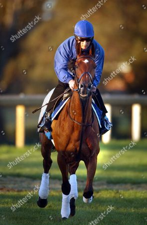 Stock Image of International Horse From the Godolphin Stables Fantastic Love Ridden by John Phelan at the Sandown Race Track Sunday 31 October 2004 in the Lead Up to the 2004 Melbourne Cup