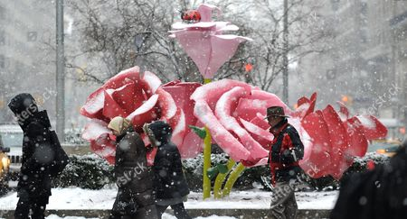 People Pass in Front of the Art Installation 'The Roses' by Us Artist Will Ryman on Park Avenue in New York New York Usa 25 January 2011 'The Roses' Cover 10 Blocks of Park Avenue with an Unseasonable Crop of Giant Pink and Red Rose Blossoms United States New York
