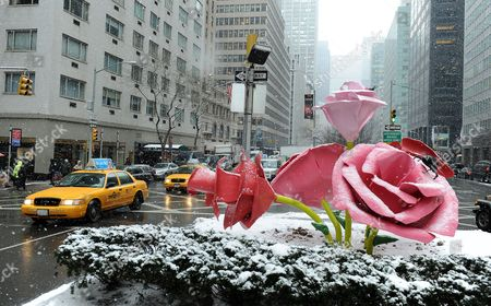 A General View of the Art Installation 'The Roses' by Us Artist Will Ryman on Park Avenue in New York New York Usa 25 January 2011 'The Roses' Cover 10 Blocks of Park Avenue with an Unseasonable Crop of Giant Pink and Red Rose Blossoms United States New York