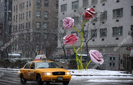 A Taxi Cab Drives Next to the Art Installation 'The Roses' by Us Artist Will Ryman on Park Avenue in New York New York Usa 25 January 2011 'The Roses' Cover 10 Blocks of Park Avenue with an Unseasonable Crop of Giant Pink and Red Rose Blossoms United States New York