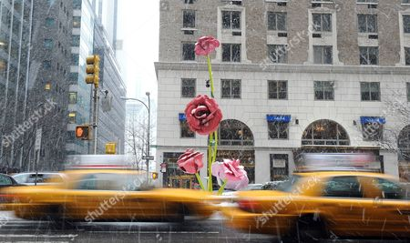 A View on the Background of the Art Installation 'The Roses' by Us Artist Will Ryman on Park Avenue in New York New York Usa 25 January 2011 'The Roses' Cover 10 Blocks of Park Avenue with an Unseasonable Crop of Giant Pink and Red Rose Blossoms United States New York