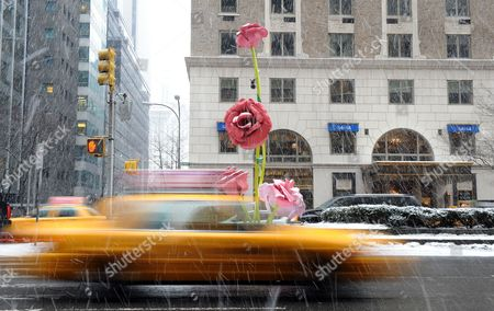 A Taxi Cab Drives in Front of the Art Installation 'The Roses' by Us Artist Will Ryman on Park Avenue in New York New York Usa 25 January 2011 'The Roses' Cover 10 Blocks of Park Avenue with an Unseasonable Crop of Giant Pink and Red Rose Blossoms United States New York