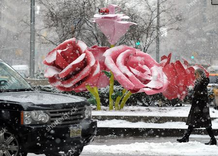 A Woman (r) Passes Near the Art Installation 'The Roses' by Us Artist Will Ryman on Park Avenue in New York New York Usa 25 January 2011 'The Roses' Covers 10 Blocks of Park Avenue with an Unseasonable Crop of Giant Pink and Red Rose Blossoms United States New York