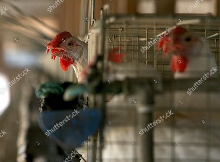 Broiler Stock Pictures, Editorial Images and Stock Photos | Shutterstock