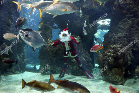 French Diver Pierre Frolla Dressed As Santa Claus Poses For Photographs with Tropical Fishes at Monaco Oceanographic Museum in Monaco 21 December 2012 France Nice