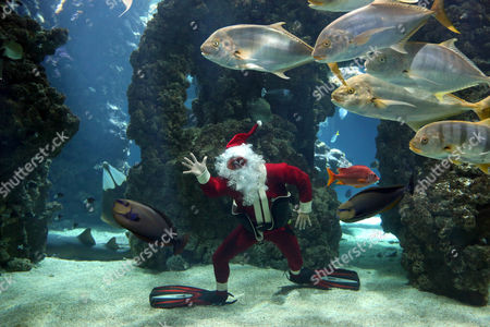 Stock Photo of French Diver Pierre Frolla Dressed As Santa Claus Poses For Photographs with Tropical Fishes at Monaco Oceanographic Museum in Monaco 21 December 2012 France Nice