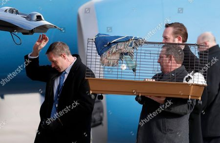 """Pet rabbit """"Marlon Bundo,"""" is loaded into a vehicle after being carried off the plane of Vice president-elect Mike Pence as he arrives with his wife Karen Pence and daughter Charlotte Pence at Andrews Air Force Base, Md"""