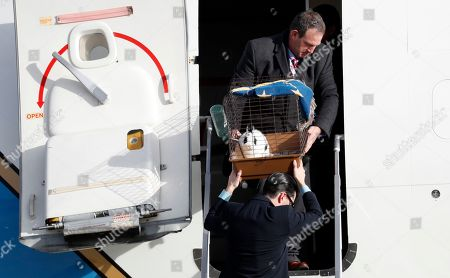 """Pet rabbit """"Marlon Bundo,"""" is carried off the plane of Vice president-elect Mike Pence as he arrives with his wife Karen Pence and daughter Charlotte Pence at Andrews Air Force Base, Md"""
