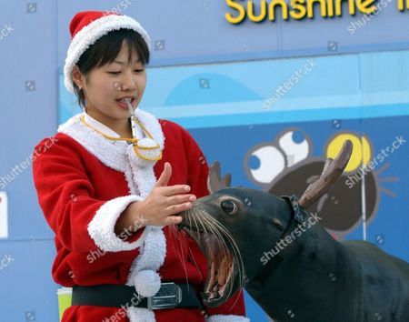 Christmas Season Begins at Tokyo's Sunshine Aquarium As Luke a Califonia Sea-lion Wears Reindeer Antlers While His Trainer Eriko Hirano is Dressed As Santa As Part of the Aquarium's Christmas Attraction Thursday 18 November 2004 the Popular Annual Attraction Continues Until Christmas Day