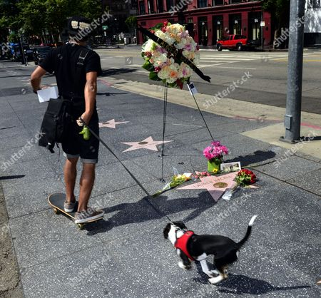 A Skake Boarder and His Dog Pass by the Hollywood Walk of Fame Star For Us Actress Lauren Bacall where There Are Placed Flowers and a Wreath on the Hollywood Walk of Fame Following Her Death in Hollywood California Usa 13 August 2014 the Actress who was Married to the Late Humphrey Bogart and was Honored with an Oscar 'In Recognition For Her Central Place in the Golden Age of Movie Making' Died of a Stroke 12 August 2014 in New York at the Age of 89 United States Hollywood