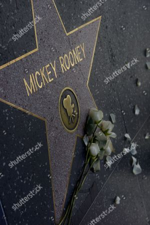 Stock Photo of Flowers Lie Atop the Hollywood Walk of Fame Star of Us Actor Mickey Rooney in Hollywood California Usa 07 April 2014 Hollywood Acting Legend Mickey Rooney One of the Great Stars of Us Movie Industry in the 1930s and 1940s Died of Natural Causes on 06 April 2014 at His North Hollywood Home Police Said He was 93 United States Hollywood