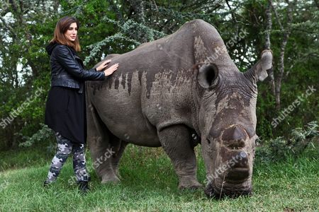 Us Model and Bollywood Actress Nargis Fakhri (l) Poses Next to Sudan the Last Male Northern White Rhino in the World Upon Her Visit to Ol Pejeta Conservancy in Nanyuki Kenya 23 May 2015 the Visits of Fakhri and Egyptian Actor and Unicef Goodwill Ambassador Khaled Abol Naga (not Pictured) who is Expected to Visit the Conservancy on 26 May is Aimed to Raise International Awareness of the Plight of the Northern White Rhino a Subspecies Whose Future Now Depends Solely on Artificial Methods of Reproduction Kenya
