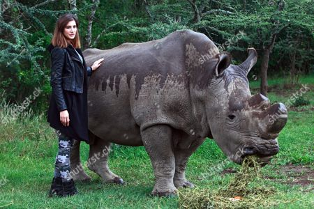 Us Model and Bollywood Actress Nargis Fakhri (l) Poses Next to Sudan the Last Male Northern White Rhino in the World Upon Her Visit to Ol Pejeta Conservancy in Nanyuki Kenya 23 May 2015 the Visits of Fakhri and Egyptian Actor and Unicef Goodwill Ambassador Khaled Abol Naga (not Pictured) who is Expected to Visit the Conservancy on 26 May is Aimed to Raise International Awareness of the Plight of the Northern White Rhino a Subspecies Whose Future Now Depends Solely on Artificial Methods of Reproduction Epa/daniel Irungu Kenya