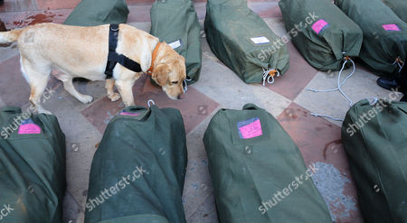A Sniffer Dog Inspects Bags Containing Interim Budget Papers That Were Kept For Security Check Outside the Parliament House in New Delhi India 17 February 2014 India's Finance Minister Palaniappan Chidambaram Presented the Government's Last Budget Before General Elections Due Later This Year Saying the Ruling Coalition Had Revived Growth and Reduced the Number of People in Poverty General Elections Are to Be Held by the End of May with the Next Government to Announce the Main Budget India New Delhi