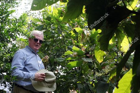 The European Union Envoy to the Peace Process in Colombia Eamon Gilmore Walks Among Cacoa Plants During a Visit to a Farm in Caloto Cauca Department Colombia 22 January 2016 the European Union (eu) Has Started to Address with the Colombian Government How to Apply the Trust Fund Aid From Brussels Which Can Promote Demining Projects and Agriculture Said the Irishman Eamon Gilmore Colombia Caloto