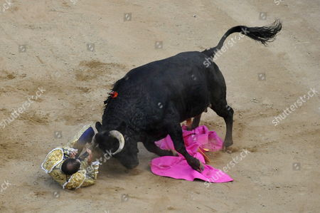 Colombian Bullfighter Julian Lopez Escobar 'El Juli' is Gored by a Bull During a Bullfight at the Canaveralejo Bullring in Cali Colombia 29 December 2012 Cali Celebrates Its 55th Annual Fair Colombia Cali