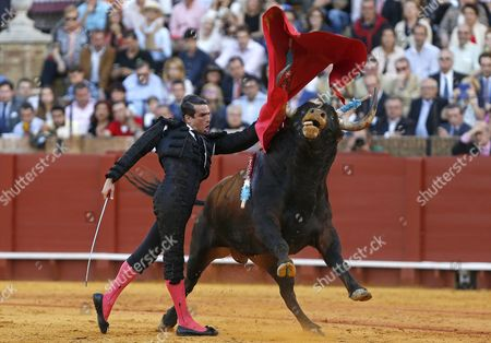 Spanish Bullfighter Jose Mari Manzanares Figths with His First Bull of the Evening During a Bullfight Held on the Occassion of the April's Fair at La Maestranza Bullring in Seville Andalusia Spain 24 April 2015 Spain Sevilla