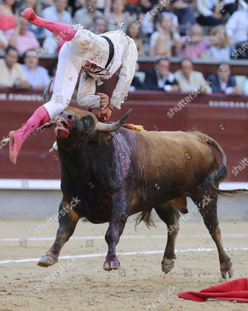 Spanish Apprentice Bullfighter Fernando Rey is Gored by His Second Steer During the 4th Bullfighting of the San Isidro Fair at Las Ventas Bullring in Madrid Spain 11 May 2015 Spain Madrid