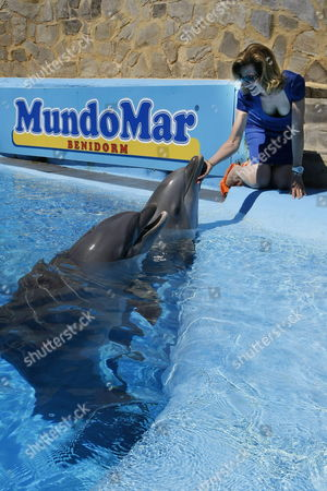 Stock Image of Princess Marie-esmeralda of Belgium Plays with a Dolphin at the Mundomar Dolphinarium in Benidorm Spain 26 August 2014 the Mundomar Foundation Along with Belgian 'Delphus' Foundation Are Promoting an Assisted Therapy Program Using Dolphins As a Therapy For Children with Psychical Disabilities As Autism Spain Benidorm